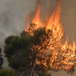 epa07922282 A tree burns in Mechref south Beirut, Lebanon, 15 October 2019. According to reports, 18 Lebanese people were admitted to hospitals for treatment following multiple wildfires that began early on 14 October in Mechref, Dibbiyeh and Al Damour areas at Chouf District in Mount Lebanon. Lebanese Army helicopters and planes provided by Cyprus were fighting the fires on 15 October morning as dozens of Civil Defense teams worked to extinguish blazes that entered residential areas. Five Civil Defense firefighters have sustained injuries during their duty.  EPA-EFE/WAEL HAMZEH
